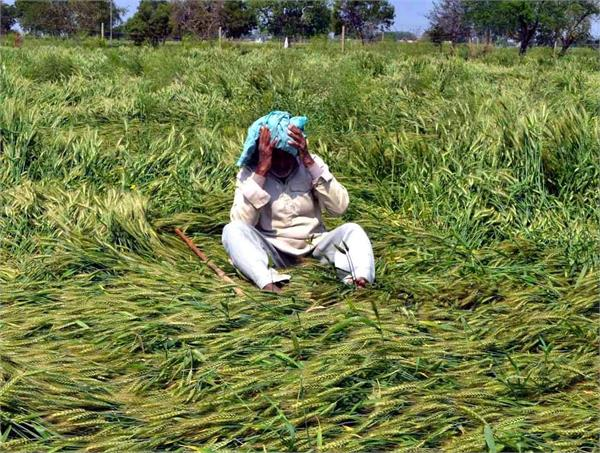 up along with the corona virus nature is also wreaking havoc on farmers