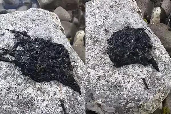 mysterious black creature video viral