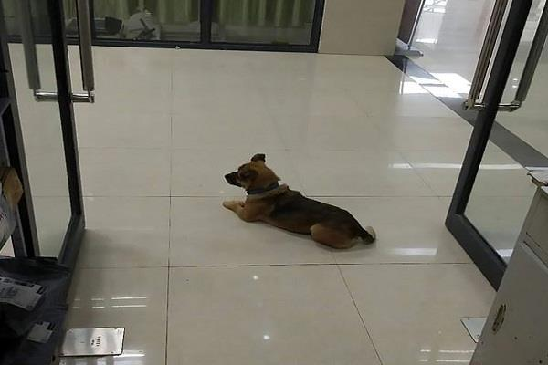 the dog waited for the owner for three months