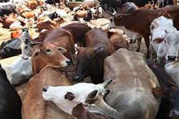 10 bovine smugglers arrest in udhmpur