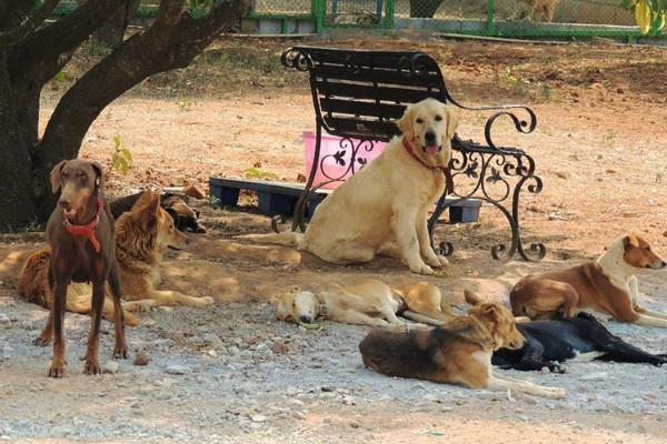 corona people left doberman labrador dogs on streets