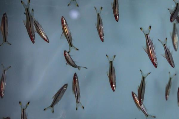wonder of lockdown these 7 species of fish seen after 50 years