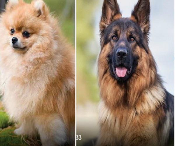 hong kong confirms 2 pet dogs infected with corona