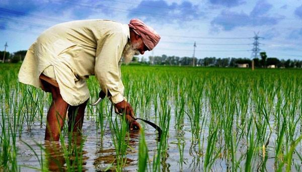 24 100 crore details of paddy crop payment missing