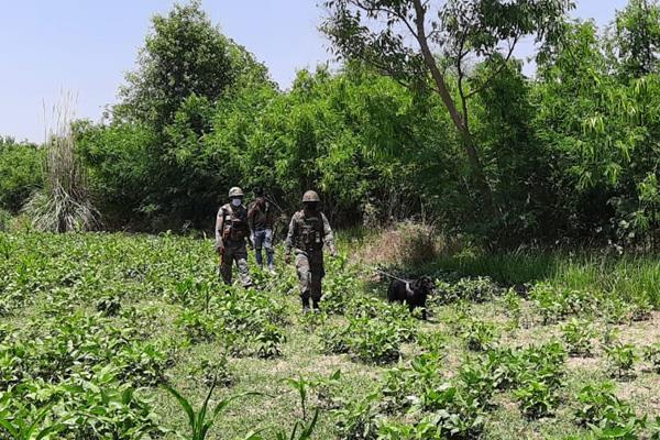 search operation in samba ramgarh