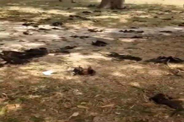 hundreds of bats died simultaneously in gorakhpur panic among rural people