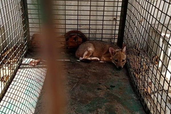 people living in slum slums eating jackals one accused arrested
