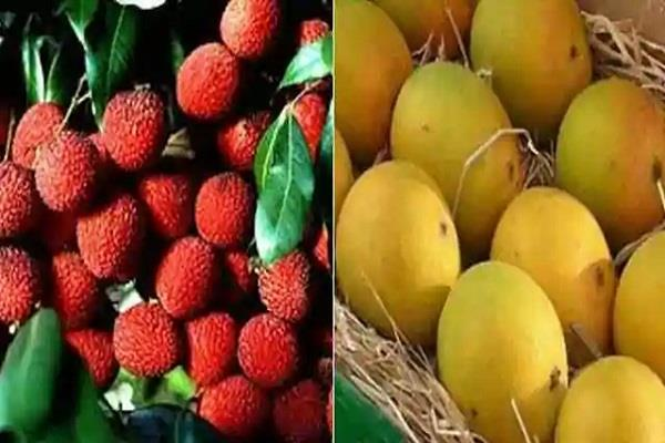 postmen will do home delivery of litchi and mango