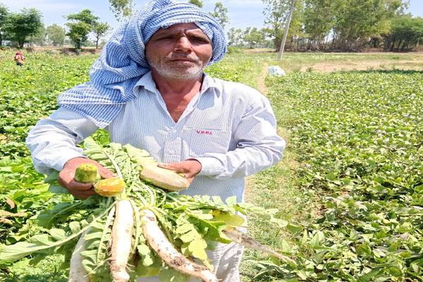 vegetable farmers are in great loss in lockdown