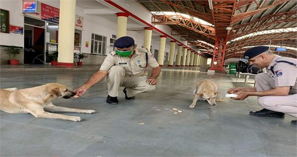 jawans are arranging food at rpf police station located in delhi cantt