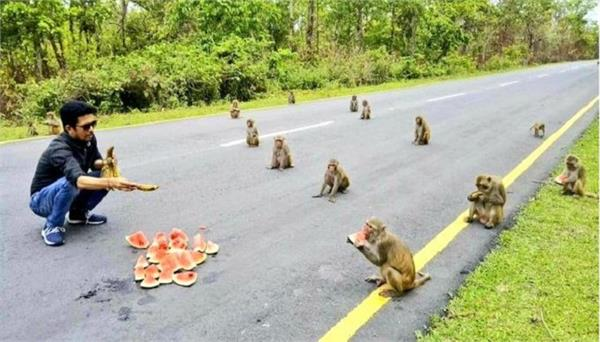 scientists involved in understanding the social distancing behavior of monkeys