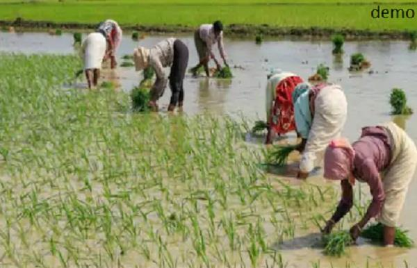 12 migrant laborers brought 60 thousand rupees rent