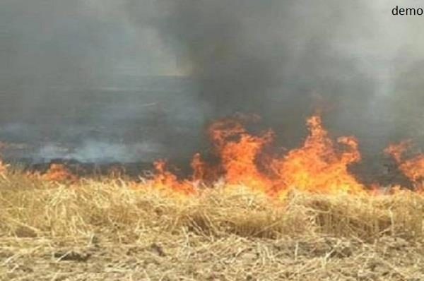 case filed against farmer who set wheat pulse on fire