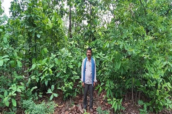 viru mahato of ramgarh has been protecting the forest for 3 decades