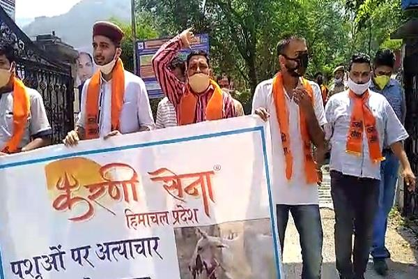 karni army staged protest on the issue of injured cow