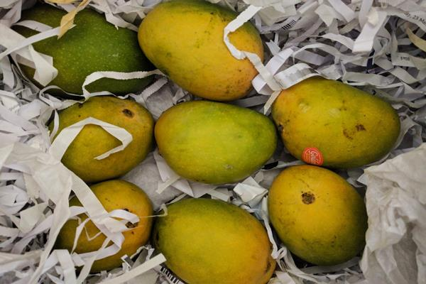 dal ki paki dushari  will soon be available in the markets