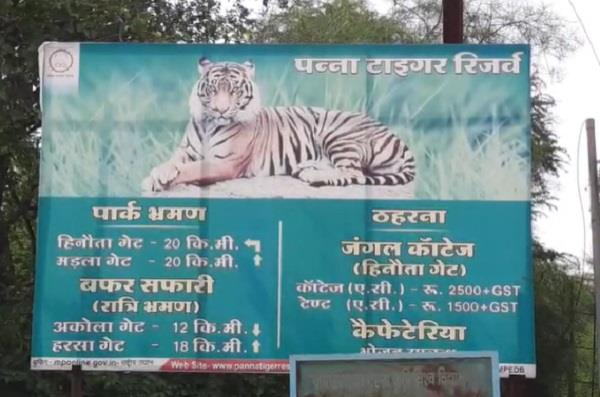 rani  tigress died in suspicious circumstances in panna tiger reserve