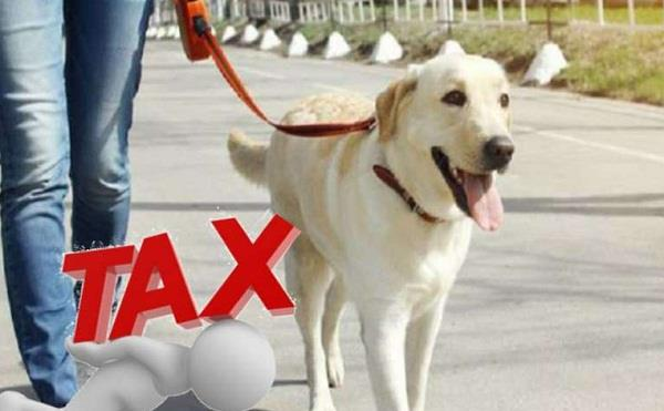 now tax will have to be paid to keep a pet dog at home