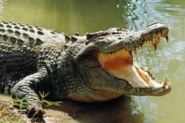 crocodile attacked two friends who went to bathe in dam