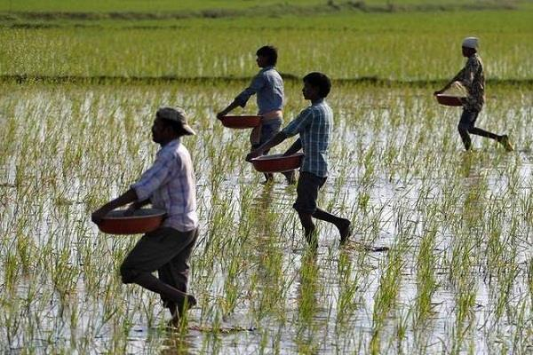 modi government gives good news for farmers msp increased on 14 kharif crops