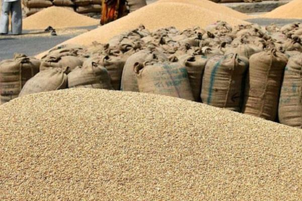 bumper production of wheat in bhopal increased wheat procurement target