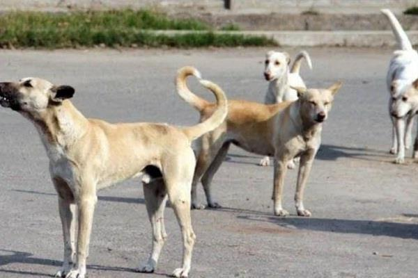 ban on sale of dog meat in nagaland photo went viral on social media