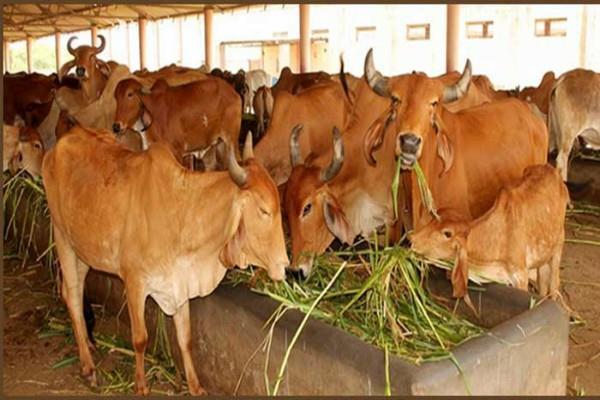udaipur aadhaar card of 11 lakh animals is being made