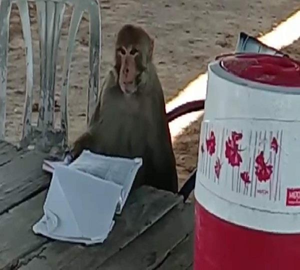 the monkey caught the police in rounds