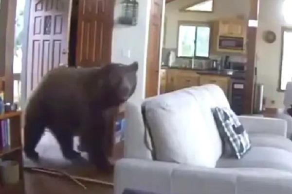 social media bears video