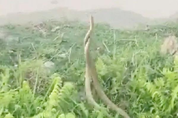 dangerous snakes video viral officer sushant