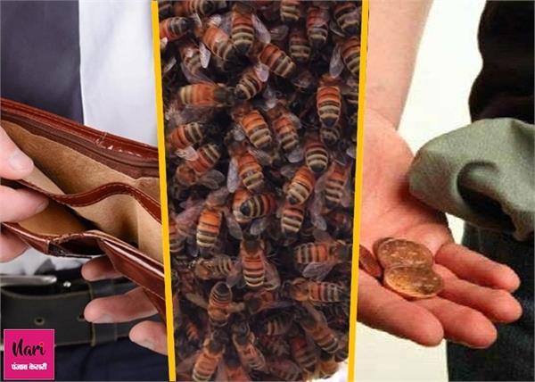 पैसे की बर्बादी लाता है मधुमक्खी का छत्ता, ये चीजें भी मानी जाती हैं अशुभ