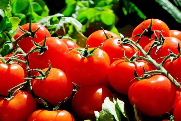 price of tomato reached 70 kg this is the major reason for inflation