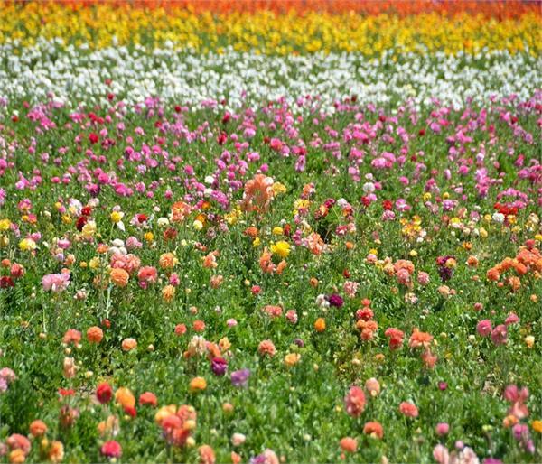 बंद किस्मत के दरवाजे खोलते हैं ये फूल, आपके लिए कौन-सा फूल है लक्की?