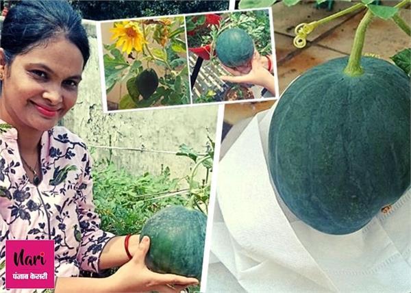 डॉ. शिवानी: कपड़े के बैग में उगाए तरबूज, किचन के कचरे से बनाई खाद