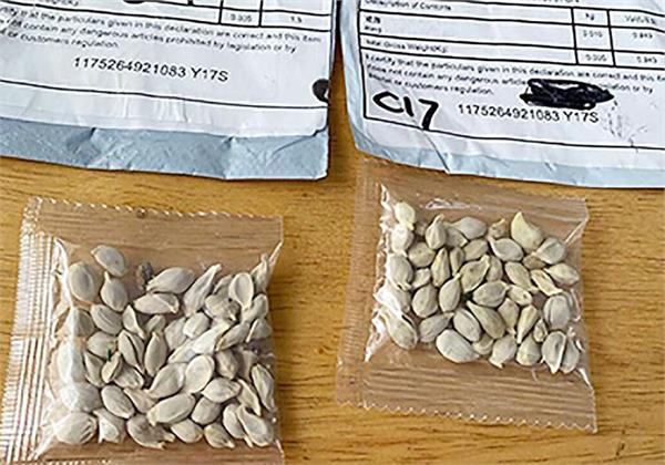warning issue in usa about mysterious seeds from reaching china