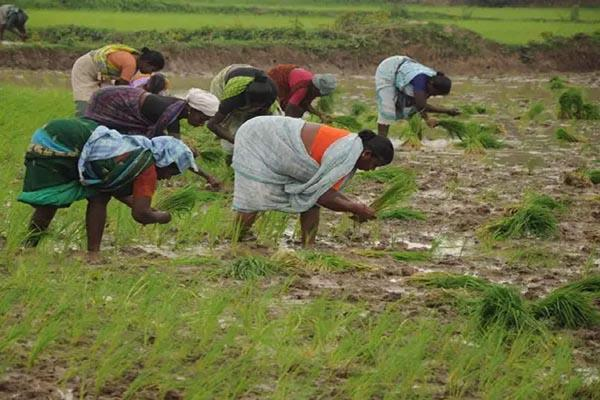 fear of heavy losses to agriculture sector during kovid 19