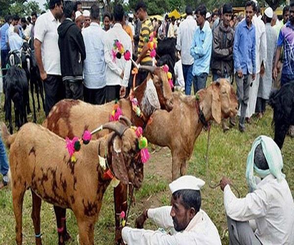 sacrifice of animals mandatory on eid ul juha darul uloom