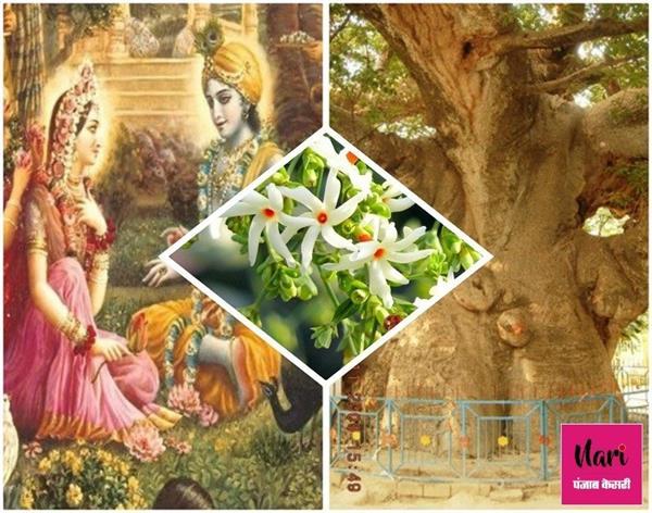 जब जिद पर अड़ गईं थी सत्यभामा, श्रीकृष्ण स्वर्ग से धरती पर ले आए थे पारिजात वृक्ष