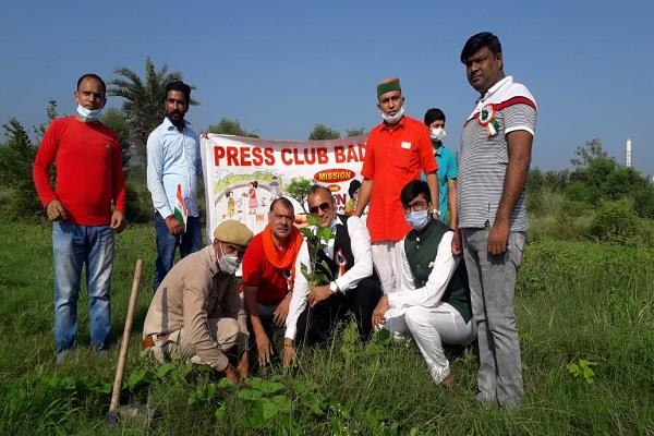 plantation took place on independence day in baddi