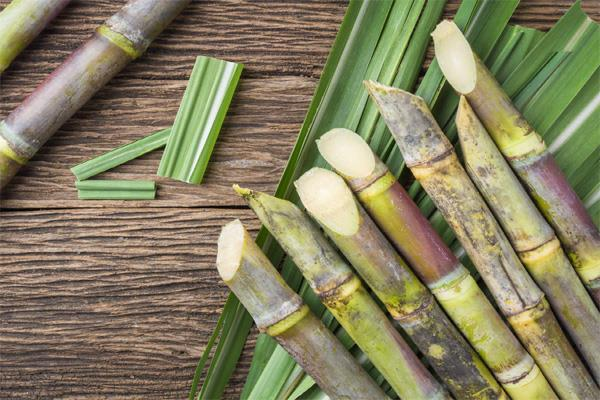 good news for farmers government increases sugarcane frp