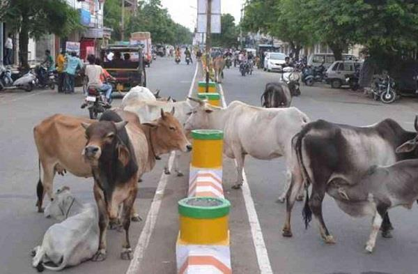 now the people of punjab can get rid of stray animals soon