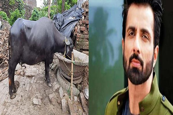 sonu sood becomes messiah for flood victims