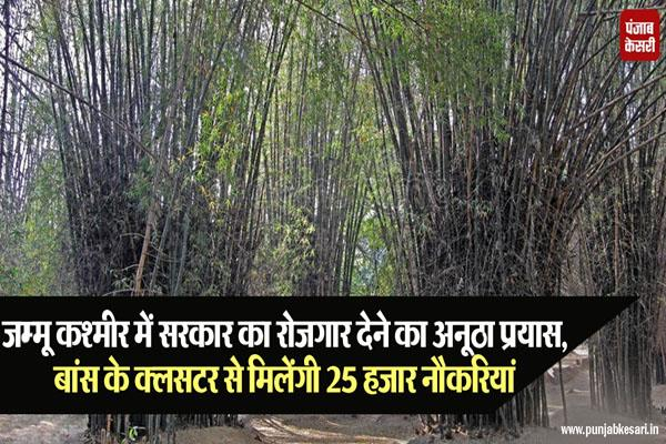 bamboo cluster is a new option for jobs in jammu kashmir