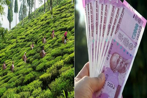 employees working in darjeeling tea gardens will get 20 percent bonus