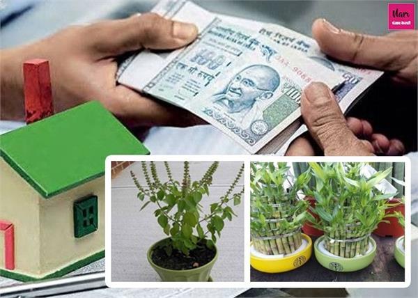 शुद्ध हवा ही नहीं, बीमारियों और कर्ज से मुक्ति दिलाते हैं ये पौधे