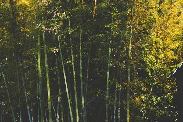 tomar launches 22 bamboo industry packages in nine states
