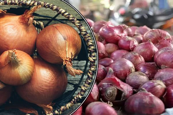 government takes decision on rising prices of onions ban on exports