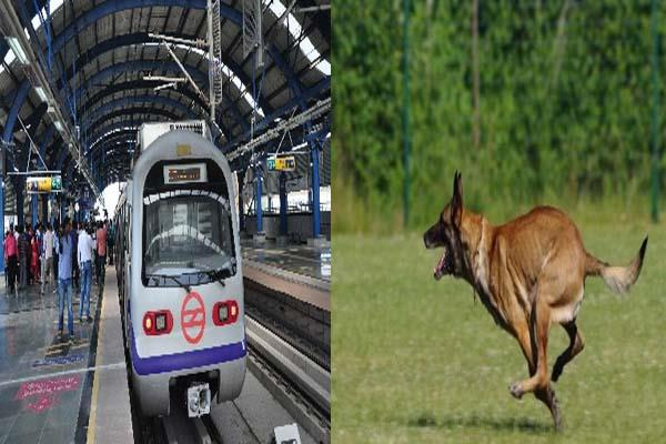 this fast dog will protect delhi metro