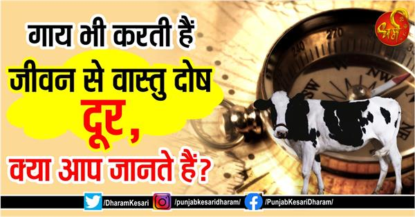 cow also remove vastu defects from life do you know
