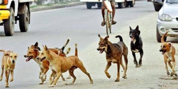 lively laborers scramble and eat stray dogs